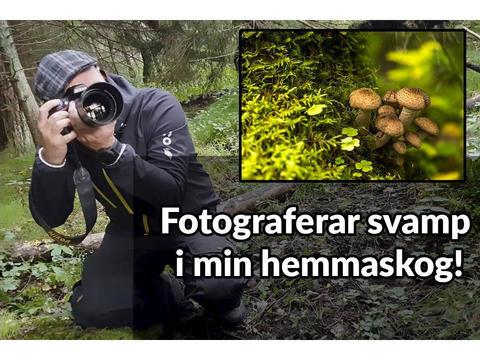Svamp- och fotopromenad med Motala Fontänhus